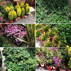 Check out this unique mix of plants some stunners in this group. Some water-wise and CA native selections included. #nativeplants #californianativeplants #waterwise #waterwisegardening #plants #gardening by louies_nursery #waterwise #waterwisegardening #drought #droughttolerant