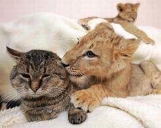 I neber seen kittenz like you guyz before.