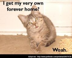 """""""I get my very own forever home? Woah."""" So adopt this little cute kitten!"""