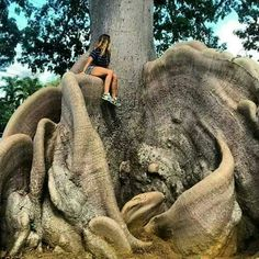 "Another ""ceiba"" tree from Puerto Rico."