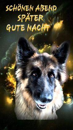 I Love Dogs, Animals And Pets, Husky, Dog Cat, Cats, Sleep, Videos, Sleep Well, Animales
