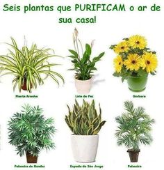 Here are few of the most incredible Air purifying plants. Indoor Farming, Flower Pot Design, Plantar, Dream Decor, Plant Decor, Fresh Flowers, Garden Inspiration, Indoor Plants, House Plants