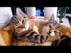 From love to ...?  | Cute and Funny Cats - http://www.gigglefinger.com/from-love-to-cute-and-funny-cats/