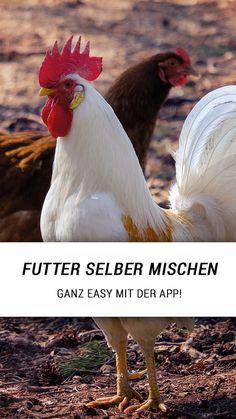 Misch Dir Dein perfekte Hühnerfutter selber - ganz einfach mit der HühnerKräuter App. Zutaten selber erstellen oder auswählen, Optimalmischungen laden und immer alle Nährwerte im Blick! React App, Kraut, Medicine, Free Range, Simple