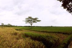 'Ngluruk Tanpa Bala' , captured by iPhone 5s