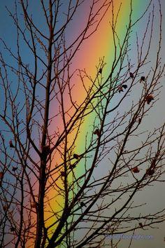 ✮ Rainbow