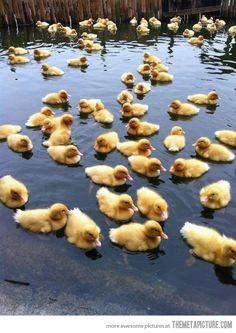 awwwwww i want them!