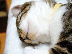 寝る猫のはなし|うにオフィシャルブログ「うにの秘密基地」Powered by Ameba