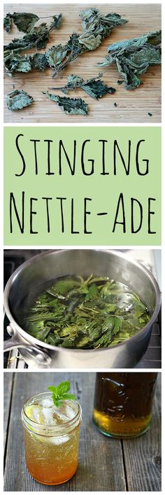 Make this refreshing Nettle-Ade with foraged stinging nettles!