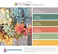 Succulent colors... I found these colors with ColorSnap® Visualizer for iPhone by Sherwin-Williams: Beguiling Mauve (SW 6269), Surf Green (SW 6473), Rural Green (SW 6418), Rejuvenate (SW 6620), Haven (SW 6437), Bee (SW 6683).