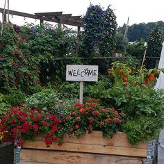 Gartenblogger-Treffen bei Volmary in Münster