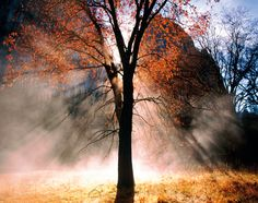 Autumn Photography Tips: 24 Tips on How to Take Awesome Pictures of Fall | Digital Camera World