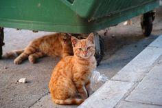 Recetas caseras para ahuyentar gatos. Tips para alejar gatos callejeros. Cómo evitar que los gatos orinen tu jardín. Remedios para alejar gatos