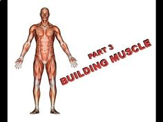 The Hidden Survival Muscle - Health and Survival: How to Build Muscle (Part 3) prepperhub.org/... The Hidden Survival Muscle In Your Body Missed By Modern Physicians That Keep Millions Of Men And Women Defeated By Pain, Frustrated With Belly Fat, And Struggling To Feel Energized Every Day