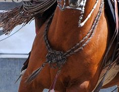 ALAMAR KNOT:  decorative knot used to tie a mecate around a horse's neck.   In traditional Old California horse training, when a  horse had graduated to become a finished  bridle horse, the alamar knot was tied from two coils of a mane hair mecate draped over the horse's neck and the knot worn on the horse's chest to denote him as a bridle horse.