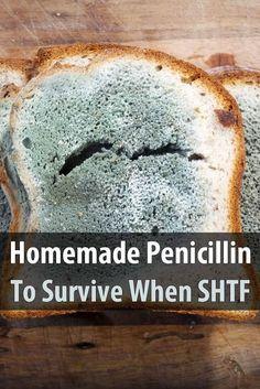 Homemade Penicillin To Survive When SHTF