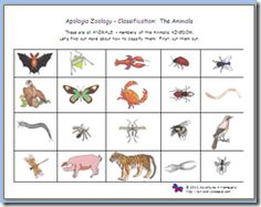 sorting/classifying vertebrates/invertebrates Apologia