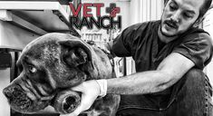 Vet Ranch – They didn't want him anymor. Vet Ranch is a wonderful organisation; they have a ton of videos on youtube showing the wonderful work they do rescuing animals by giving them vet care that the average shelter can't.)