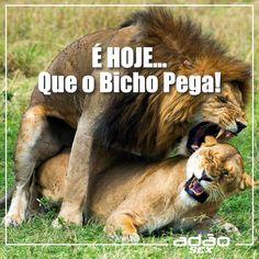 Se prepara que hoje o bicho vai pegar!!  www.adaosex.com.br