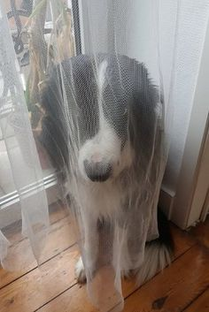 This dog who thinks he is so awesome at hide and seek. | 19 Dogs Who Will Make Literally Anyone Happy