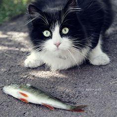 This cat looks like my friend Megan cat cashier