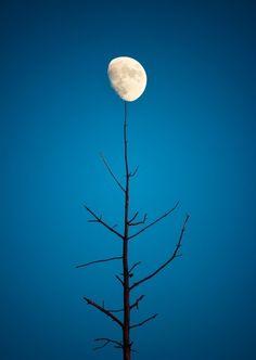 ... moontree