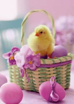 quenalbertini: Spring or Easter decoration Don Pollo, Easter Bunny, Easter Eggs, Easter Chick, Ostern Wallpaper, Easter Pictures, Easter Parade, Easter Holidays, Baby Chicks