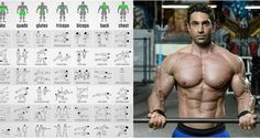 Push/Pull/Legs Split: Day Weight Training Workout Schedule and Plan Push/Pull/Legs Split: Day Weight Training Workout Schedule and PlanIf you are past the beginner's stage and want to gain muscle, one of Split Workout Routine, Push Pull Workout, Gym Workout Chart, Workout Splits, Workout Schedule, Workout Routines, Training Schedule, Training Plan, Leg Training