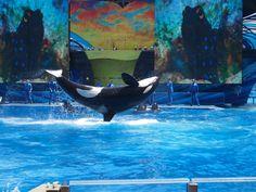 Seaworld Orlando/Florida 2012 Orlando Florida, Seaworld Orlando, Sea World, Whale, Parks, Animales, Whales, Orlando