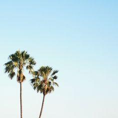 LA palm trees #travel #california