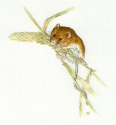 Field Mouse Needle Painting Embroidery Kit - a Hand Embroidery Design as an Alternative to Cross-stitch.