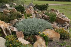 of a rockery garden planted with natives.Example of a rockery garden planted with natives. Drought Resistant Plants, Plants, Garden Elements, Organic Raised Garden Beds, Lawn And Garden, Rockery Garden, Native Garden, Rock Garden, Garden Plants