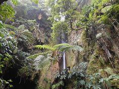 Mata José do Canto, Furnas, Azores  www.bensaudehotels.com