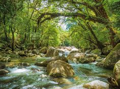 The loop walk at Mossman Gorge is full of life after the rains. We love sitting here listening to the moving water fully immersed in the rainforest. Join our walking tour to experience this place for yourself.