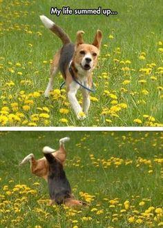 The life of a Beagle