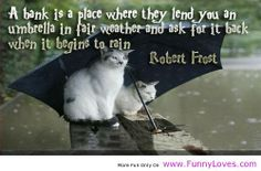 How funny is this photograph? Two cats sitting in the rain underneath a big umbrella waiting for the Ark to take them away from the flood Cat Umbrella, Black Umbrella, Animal Pictures, Funny Pictures, Rain Pictures, Free Pictures, Funny Images, Funny Animals, Cute Animals