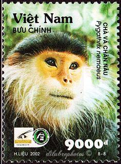 Vietnam.  PRIMATES.  PYGATHRIX NEMAEUS Issued 2002 Apr 10,