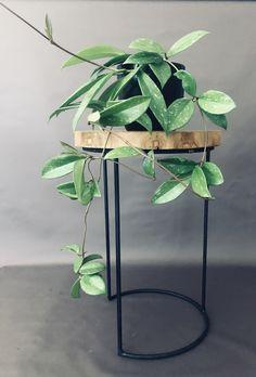 Exotic Plants, Exotic Flowers, Plant Art, Plant Decor, Planting Succulents, Planting Flowers, Best Indoor Hanging Plants, Drought Resistant Plants, Growing Greens