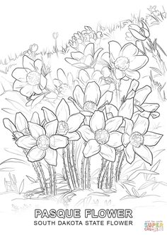 Click The South Dakota State Flower Coloring Pages To View Printable Version Or Color It Online