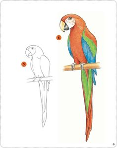 Parrot Drawing Refrence the Beauty Of Colorful Parrot Macau is Marvellous Teach Your Kid Art Drawings For Kids, Bird Drawings, Cartoon Drawings, Easy Drawings, Animal Drawings, Bird Drawing For Kids, Parrot Cartoon, Parrot Logo, Parrot Fish