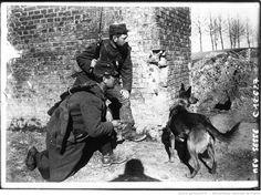 Recherche des blessés par un chien sanitaire, sous le feu de l'ennemi : [photographie de presse] / Agence Meurisse   Gallica