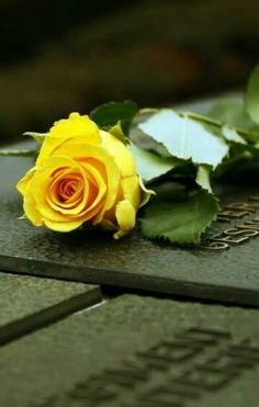 İ love yellow roses ;)
