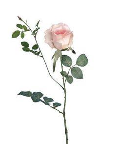 Alice Rose 70cm Pink