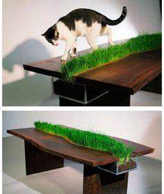 Cat table! Xxx