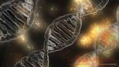 dna microscopic cell gene helix science medical biology genetic medicine molecule chromosome molecular scientific health research technology biotechnology life evolution structure chemistry biochemistry dna dna dna dna dna Seasonal Allergies Virus Arn, Angelman Syndrome, Marfan Syndrome, Dna Repair, Gene Therapy, Life Form, Autoimmune Disease, Genetics, Fibromyalgia