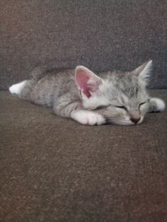 """""""A cat sleeps with its whole body."""" --Author Unknown"""