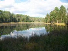 Beaver pond on one of the trails.