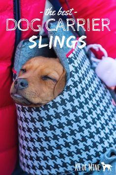My Daily Tote Canvas Shoulder Bag Hungarian Vizsla Brown Dog Womens Handbag