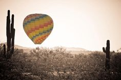 A Hot Air Balloon on the lush Arizona Sonoran desert with giant saguaro cactus as a black and white sepia with selective color fine art photography print, canvas art and Acrylic Print by James Bo Insogna