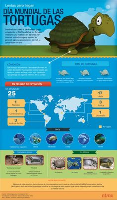 23 de mayo, Día Mundial de las Tortugas.
